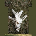 American Kaiser Dragon Skull by Zhon 150x150 - Ultimate Skull Reference Images Pack