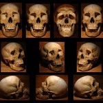 Human Skull 2 by rgstock777 150x150 - Ultimate Skull Reference Images Pack