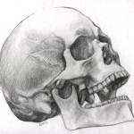 Possibly Human Skull by PixelTribe 150x150 - Ultimate Skull Reference Images Pack
