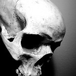 Skull by BasDeEsch 150x150 - Ultimate Skull Reference Images Pack