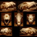Wolf Skull by rgstock777 150x150 - Ultimate Skull Reference Images Pack