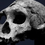 dmanisi skull front 500 150x150 - Ultimate Skull Reference Images Pack