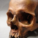 f418626e33277a1225dd77d5ae1e6d42 150x150 - Ultimate Skull Reference Images Pack