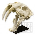 variants large 4412 150x150 - Ultimate Skull Reference Images Pack