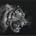 Tigers Rferences 52 150x150 - Ultimate Animals Airbrush Reference Images Pack