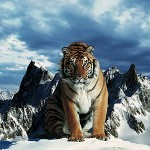 Tigers Rferences 94 150x150 - Ultimate Animals Airbrush Reference Images Pack