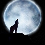 wolf reference 46 150x150 - Ultimate Animals Airbrush Reference Images Pack