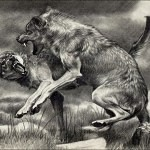 wolf reference 50 150x150 - Ultimate Animals Airbrush Reference Images Pack