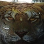 Airbrush Tiger Car Hood 22 150x150 - Airbrush a Tiger on The Car Hood Without Any Stencil