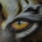 Airbrush Tiger Car Hood 30 150x150 - Airbrush a Tiger on The Car Hood Without Any Stencil
